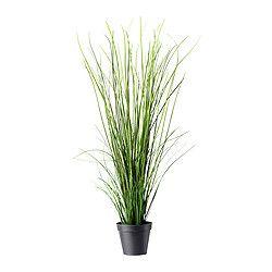 Zimmerpflanzen, Topfpflanzen & Blumenkübel - IKEA