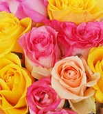 Peoples Flowers!  Enter to Win a Dozen Roses