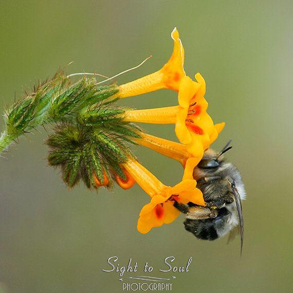 Bee Nursery Wall Art nature photography bee photo by SightToSoul