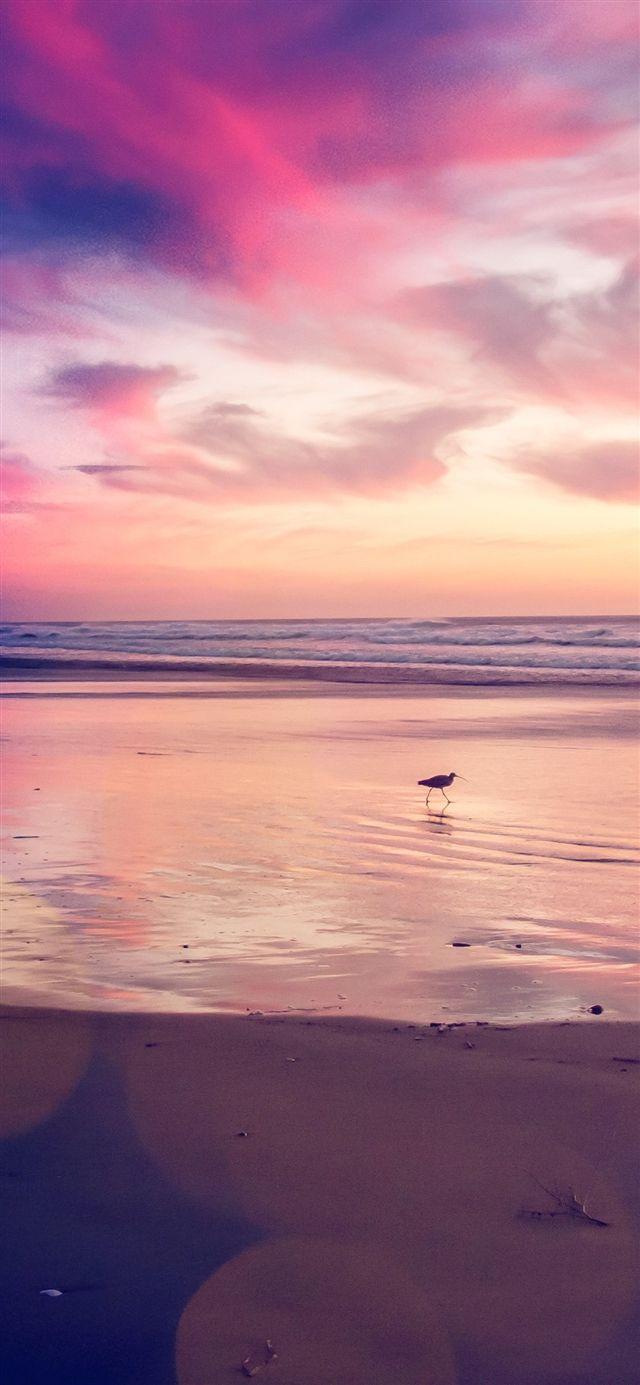 Sunset Beach Bird Iphone X Wallpaper Beach Sunset Wallpaper Beach Wallpaper Beach Wallpaper Iphone
