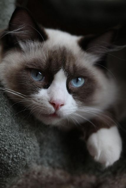 """""""Since each of us is only blessed with one life, why not live it with a cat?"""" --Robert Stearns"""