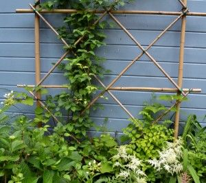 DIY:  Bamboo Trellis - To build a trellis, lay out a pattern on the lawn, use a piece of wire & some jute to join the intersecting pieces & place against a wall in the yard.