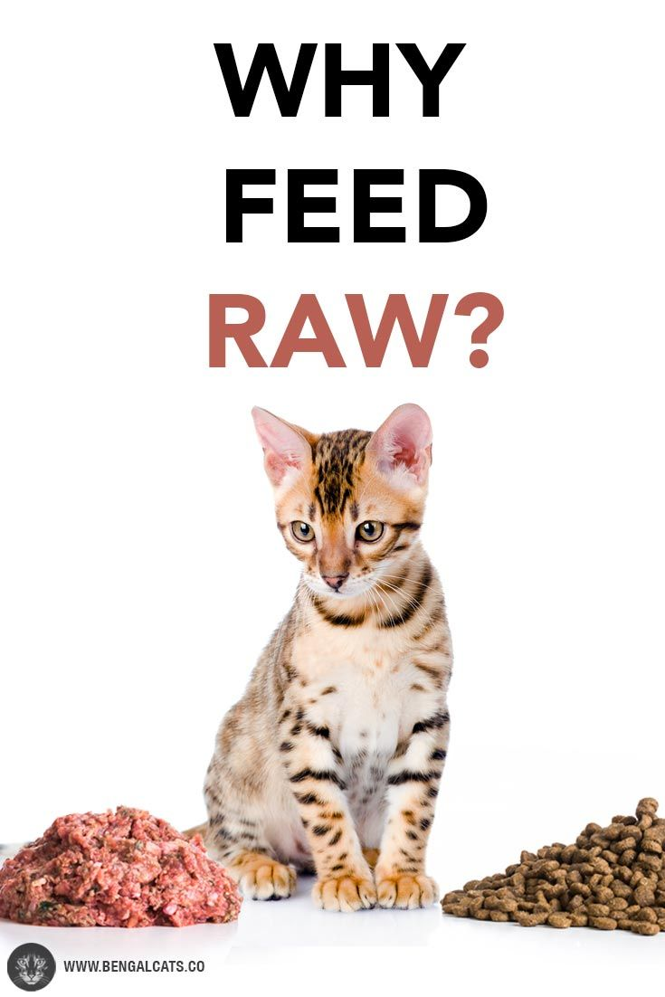 How A Raw Food Diet Can Benefit Your Cat S Life Raw Food Diet Raw Food Recipes Raw Cat Food Recipes