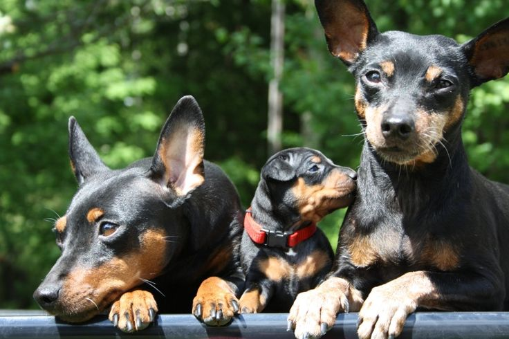 min pin family                                                                                                                                                                                 More