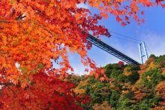 茨城県常陸太田市の竜神大吊橋は紅葉の名所です 橋の長さは375メートルで歩行者専用として国内最大級の長さを誇る吊橋です 橋の上から観る紅葉は絶景ですよ() tags[茨城県]