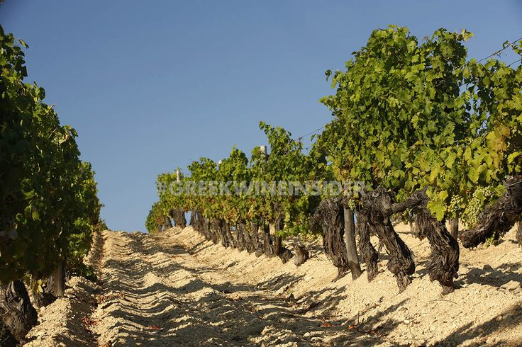 Tsantali Vineyards on Mt.Athos