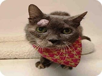 URGENT! Kill Shelter! Senior Domestic Mediumhair Cat for adoption in San Pedro, California - PINKY AND THE BRAIN. No explanation for what is wrong with this cat.