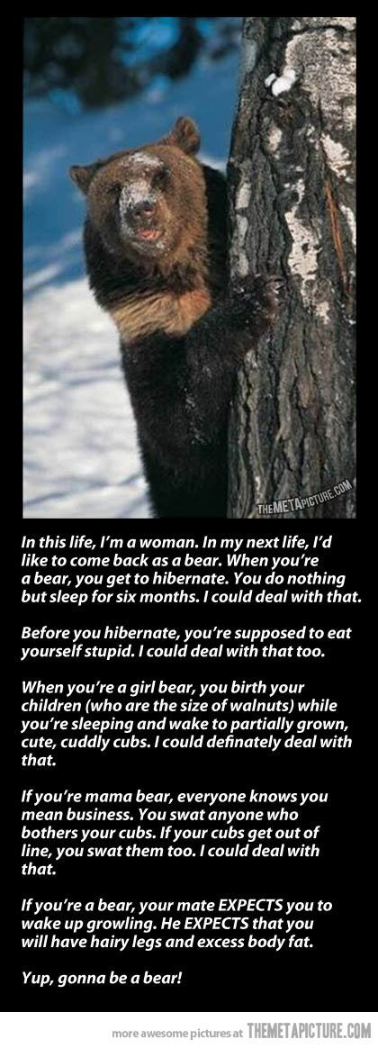 In my next life, I'd like to come back as a bear…