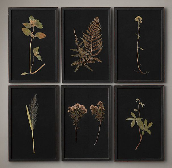 HAND-PRESSED BOTANICALS ON LINEN BLACK $149 Christopher Wilcox and his team of naturalists hand-press botanicals grown in his Hollywood Hills garden. Mounted on linen and expertly framed, each specimen displays its unique, and often haunting, beauty and takes on the visual impact of art.