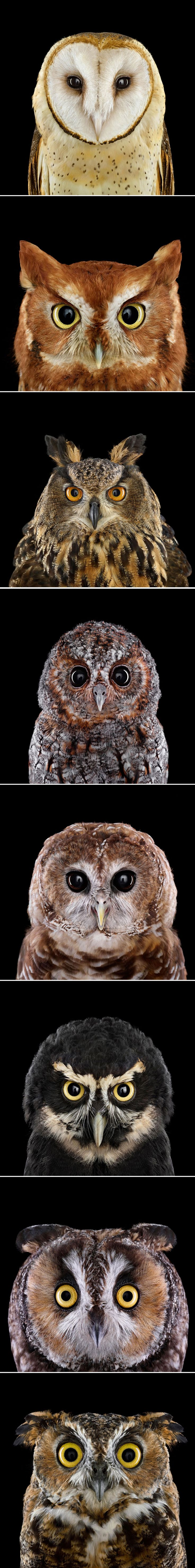 Who's Who - These owls may wear the same game face, but when it comes to personality, they're as different as day and night. - a neat article about different types of owls