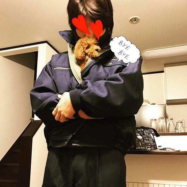 朝彼に包まれてた(❁´ω`❁) 幸せそ〜☺️いいな〜☺️ お見送り一緒にしたから、これから2度寝します💤(笑) #トイプードル#トイプードルレッド#トイプー#トイプードル部#愛犬#カール#dog#instadog#toypoodle#love