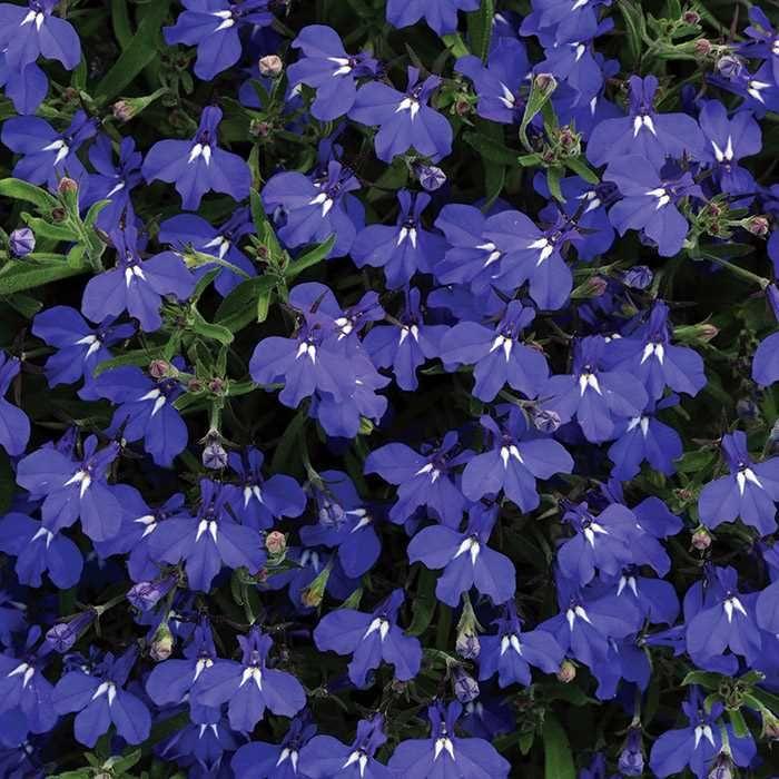 96 Best Burpee Home Gardens Images On Pinterest Texas
