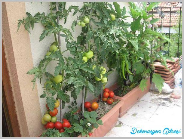 Balkon ya da terasta yetiştirilebilecek sebzeler - http://www.dekorasyonadresi.com/balkon-ya-da-terasta-yetistirilebilecek-sebzeler/