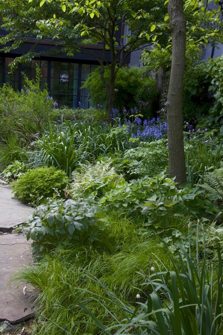 Ten Top Tips For Small Shady Urban Gardens: Best 25+ Townhouse Landscaping Ideas On Pinterest