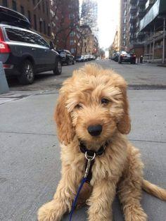 Such a cute puppy