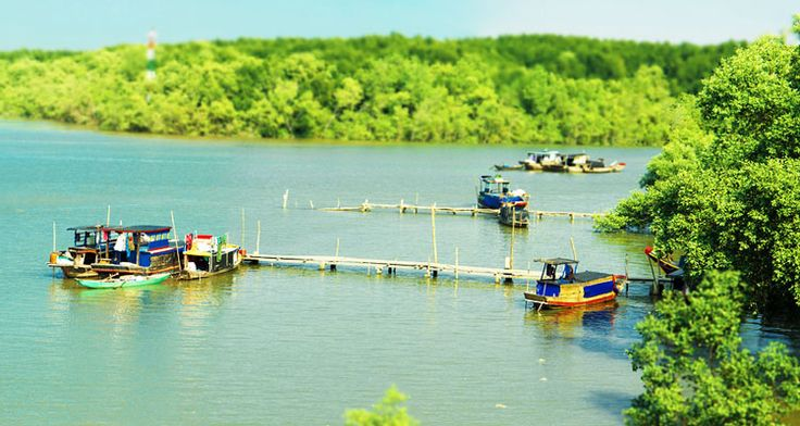 Discover Can Gio forest tour. A unique product that we are now offering is an Eco-Adventure speedboat tour to the Can Gio Mangrove Forest (UNESCO Biosphere Reserve).
