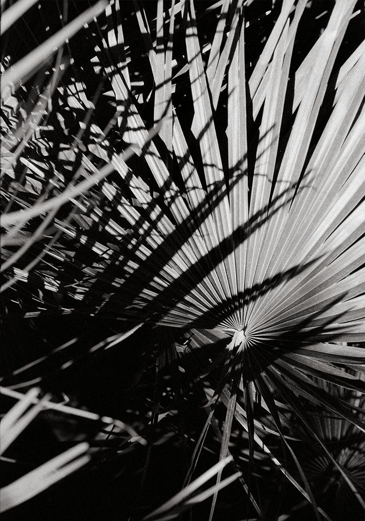 1000 images about le jardin des plantes on pinterest for Le jardin des plantes