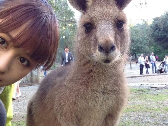 前田敦子& kangaroo