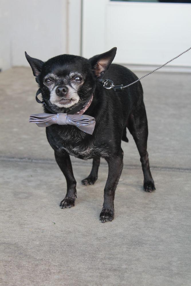 Adopt Tito On Dog Adoption Cat Adoption Adoption