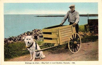 #1930's Attelage de Chien - Dog Cart in Rural Quebec, Canada