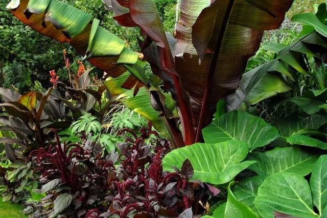 Mixed tropical plants