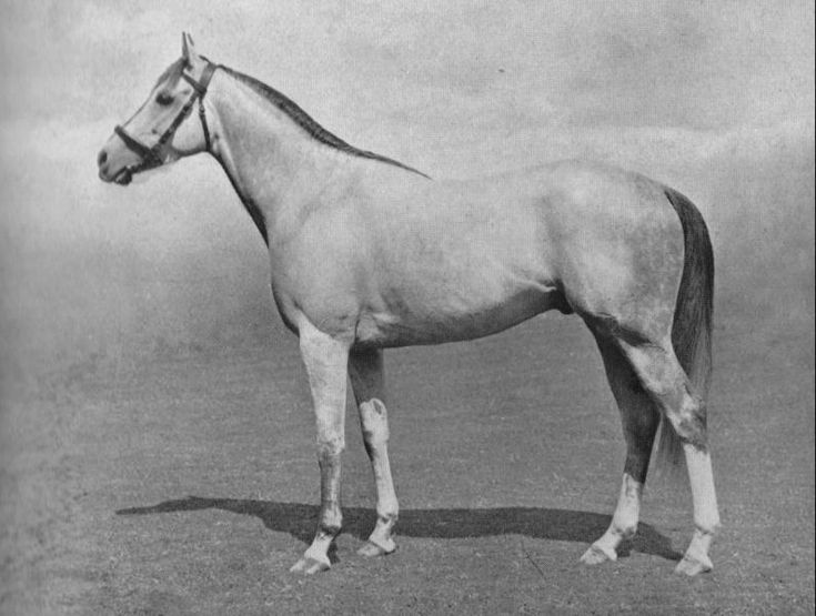 Mahmoud. Winner of the 1936 Epsom Derby, this beautiful grey was to become one of the top sires of broodmares in the 20th century. Mahmoud's daughters Grey Flight, Almahmoud (the grandmother of Northern Dancer), Majedah and Happy Mood would be influential broodmares of some of the great horses of recent time. Here is the link to read the full article on http://thoroughbredancestry.com/?p=200  to read about the accomplishments of Mahmoud.