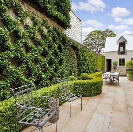 espalier trees - Belgian fence espalier in a Sydney Australia patio - glamourdrops via Atticmag