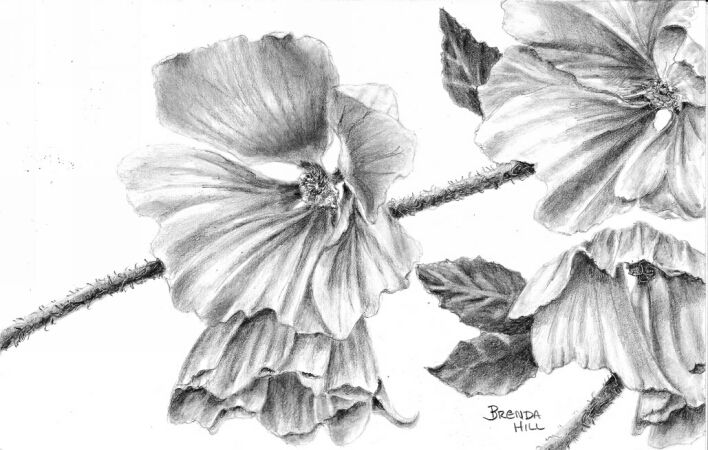 graphite floral botanical by  Brenda Hill Out On A Limb