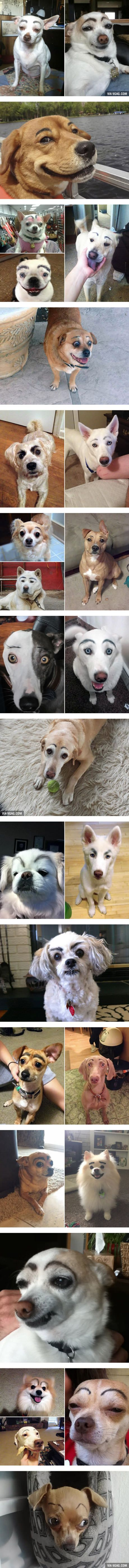 Dogs Look So Much Better With Makeup Eyebrows