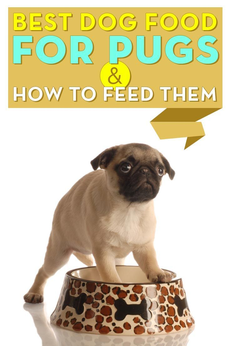 Best Dog Food For Pugs 2018 How To Feed What To Feed Pugs Dog