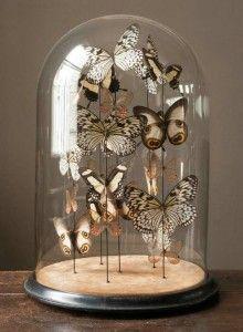 cloche papillon, tendance, déco, maison, cabinet de curiosité