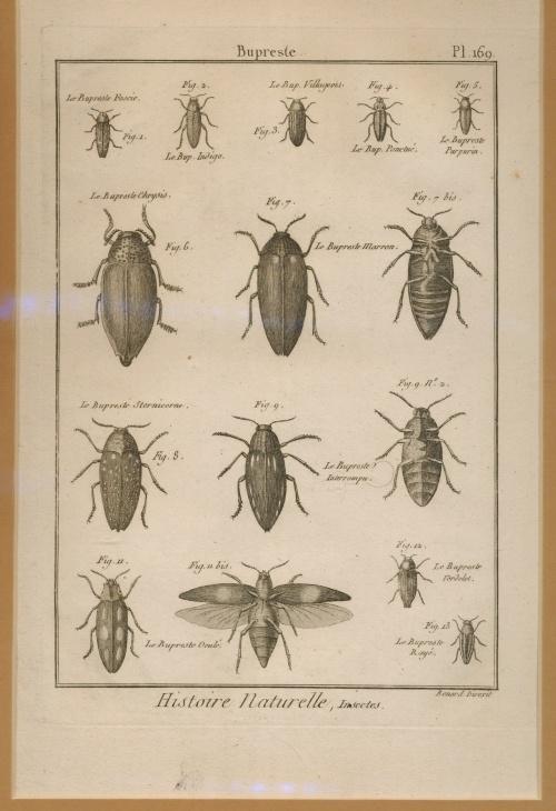 Les 45 meilleures images du tableau Planches naturalistes sur Pinterest   Histoire naturelle ...