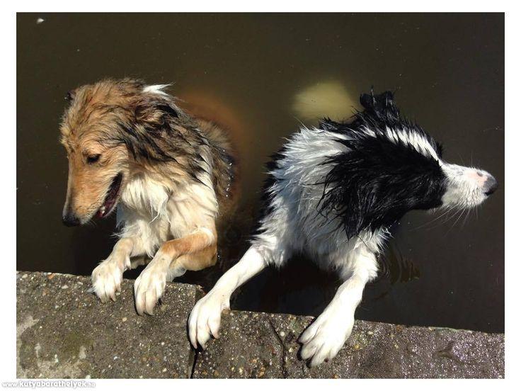 Kutyás helyek - Deseda - kutyabarát vízpart/strand  #valódi #kutyabarát #strand #deseda #kaposvár #hungary #magyarország #kutyabaráthelyek #dogfriendly #petfriendlyplaces #petfriendly #places
