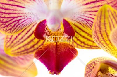 Extreme close up of orchid - Abstract closeup of an orchid.