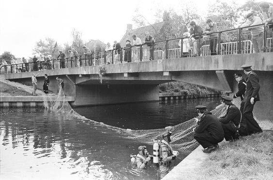 1981 – Breda. Burgemeester Pastoorsstraat. Vangst Zeehond Moby Dick door Rijks Instituut voor Natuurbeheer met behulp van politie en brandweer voor transport naar zeehondencrèche Pieterburen.