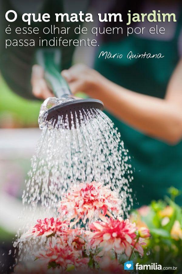 8 dicas para manter um belo jardim