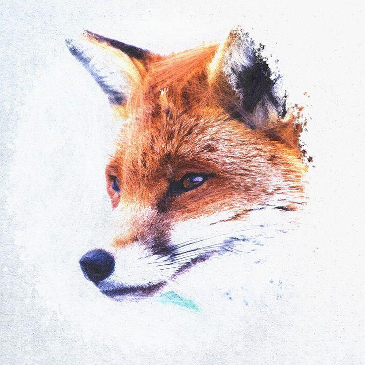 #animalphotography #painting #fox #artwork