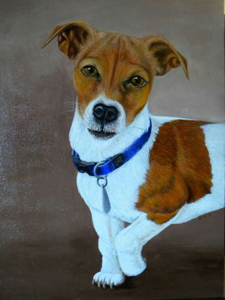 Jack Russell called Amy nr 2.  450X300mm,  Acrylic on canvass. Painted by Susan Brett.