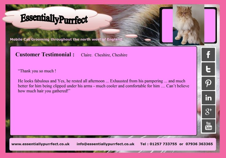 Customer Testimonial of EssentiallyPurrfect #mobile #ExoticLongHair #Persian #cat #catgrooming service. Claire #Chester #Cheshire
