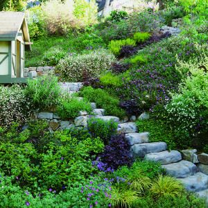 Hillside Landscaping Ideas | The path and ribbons of pink and bronze draw the eye up the steep ...