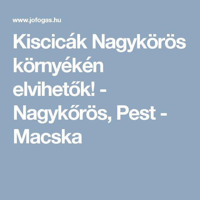 Kiscicák Nagykörös környékén elvihetők! - Nagykőrös, Pest  - Macska