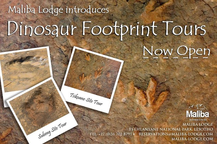 With great excitement we would like to announce our new activity - Dinosaur Footprint Tours! Travel with our Dinosaur Guide to the local footprint sites & learn about the dinosaurs that once walked there! Check out the tour rates on our site: http://maliba-lodge.com/activities/in-and-around-the-lodge/