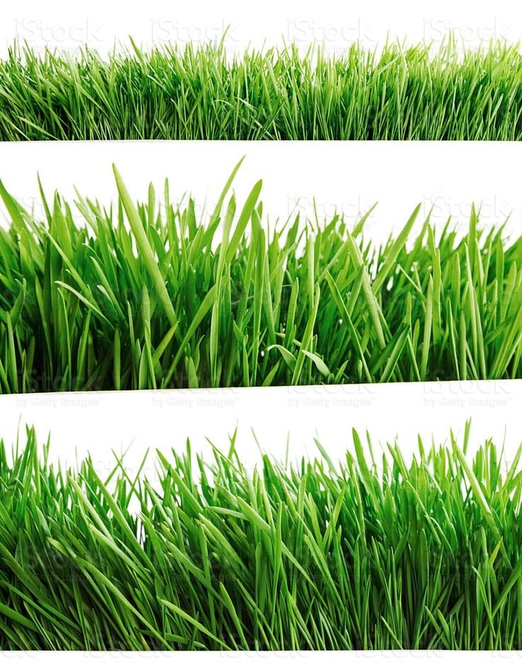 Green grass isolated on white royalty-free stock photo