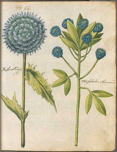 Hortulus Monheimensis 00123 by peacay