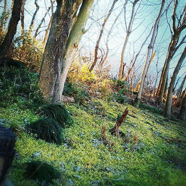 【itsu_mimi】さんのInstagramをピンしています。 《おはようございます(*´∀`) 朝のウォーキングで 絵本に出てくるような 森林の風景発見✨ マイナスイオンが気持ちいい🌿 素敵な休日を💗 . . . #森#マイナスイオン #木#グリーン #green #自然 #お散歩 #自然が好き #緑 #ナチュラル #癒し #写真撮る人と繋がりたい #緑のある暮らし#絵本 の様#instalike #instajapan #instagreen#instalook #instapic #picturelove#tree#story #instanail#instalook  #日 #光 #自然の風景#癒し》