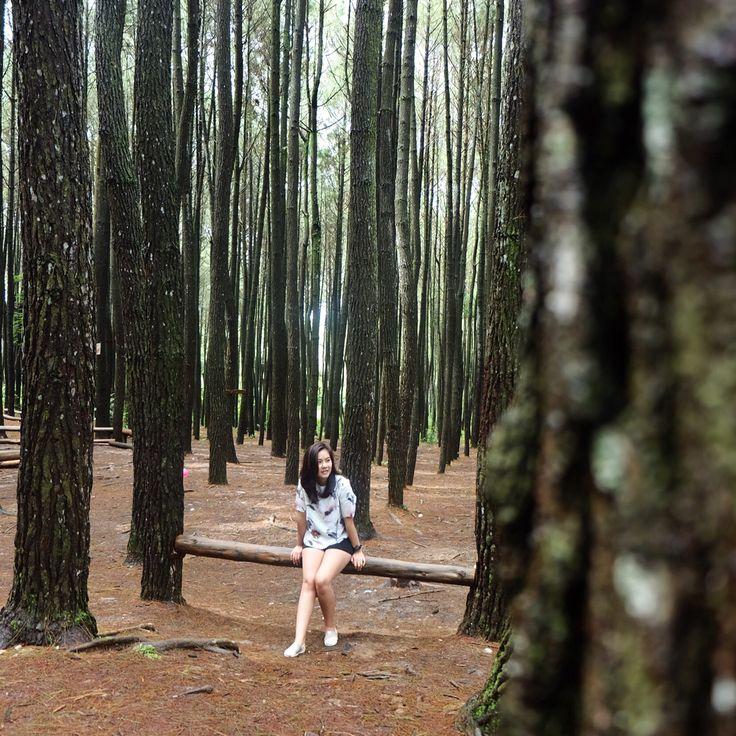 Hutan pinus Imogiri Jogyakarta