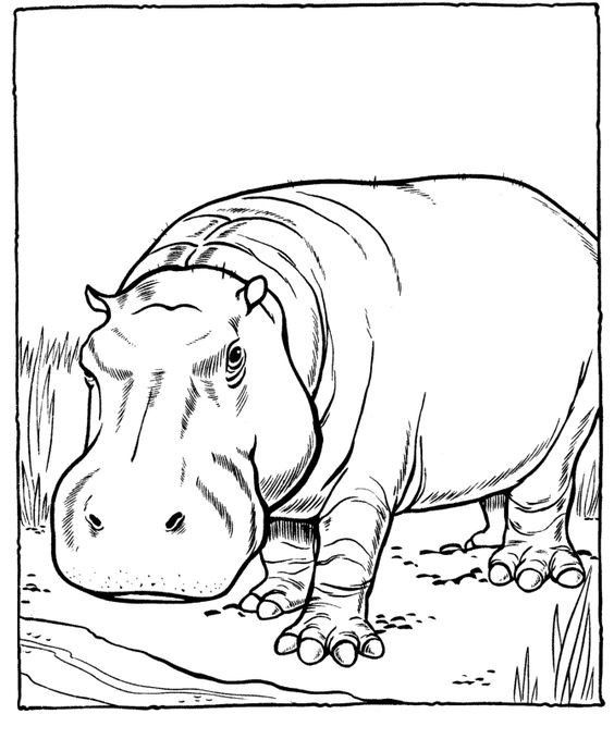 Omeletozeu Animal Line Drawings Zoo Coloring Pages Animal Coloring Pages