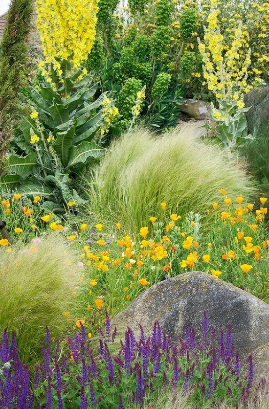 Dry garden at RHS Hyde Hall, Essex, UK.  photo: ukgardenphotos.