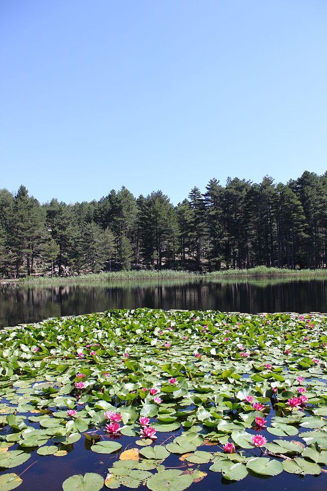 Corsica - Lacs Naturels - Lac de Creno . Lavu à Crena . Situé dans la région des Deux-Sorru, au-dessus des villages d'Orto et de Soccia,de Guagno dans le massif du Monte Rotondo, (Corse-du-Sud)le lac culmine à 1 310 mètres. Son émissaire est le ruisseau de Creno, qui se jette dans le Grossu ou Guagno, un affluent du fleuve le Liamone.