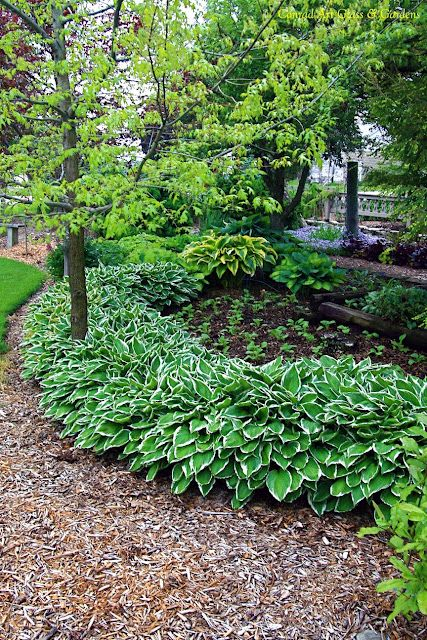 This is pretty...gives me an idea to make a hosta-lined path...